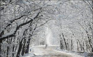 جشنواره زمستان