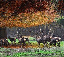تور بازدید از پارک ملی گلستان